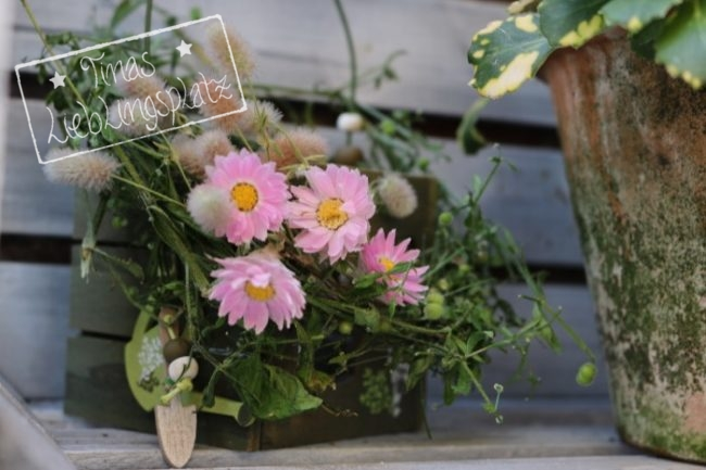 Garten_rosa_Strohblume